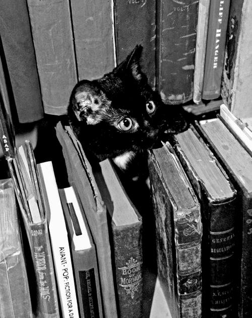 Cat-books.jpg