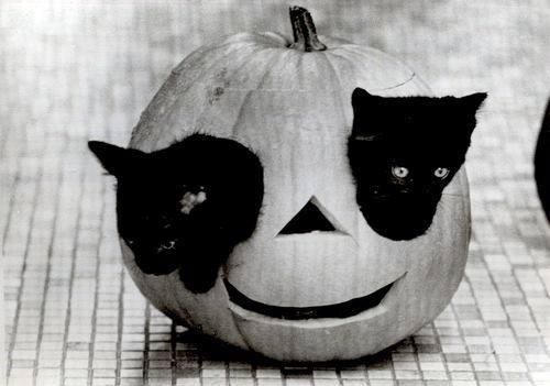Pumpkin-cats.jpg